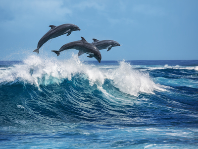 three dolphins jumping over the waves in the beautiful blue ocean